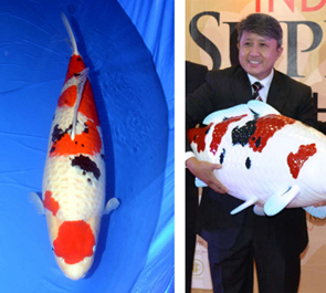 Hikari info news release for Champion koi fish