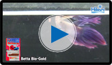 Betta Bio-Gold