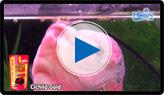 Cichlid Gold