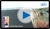 Cichlid Bio-Gold+