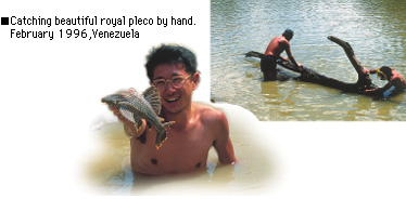 Catching beautiful royal pleco by hand. February 1996,Venezuela